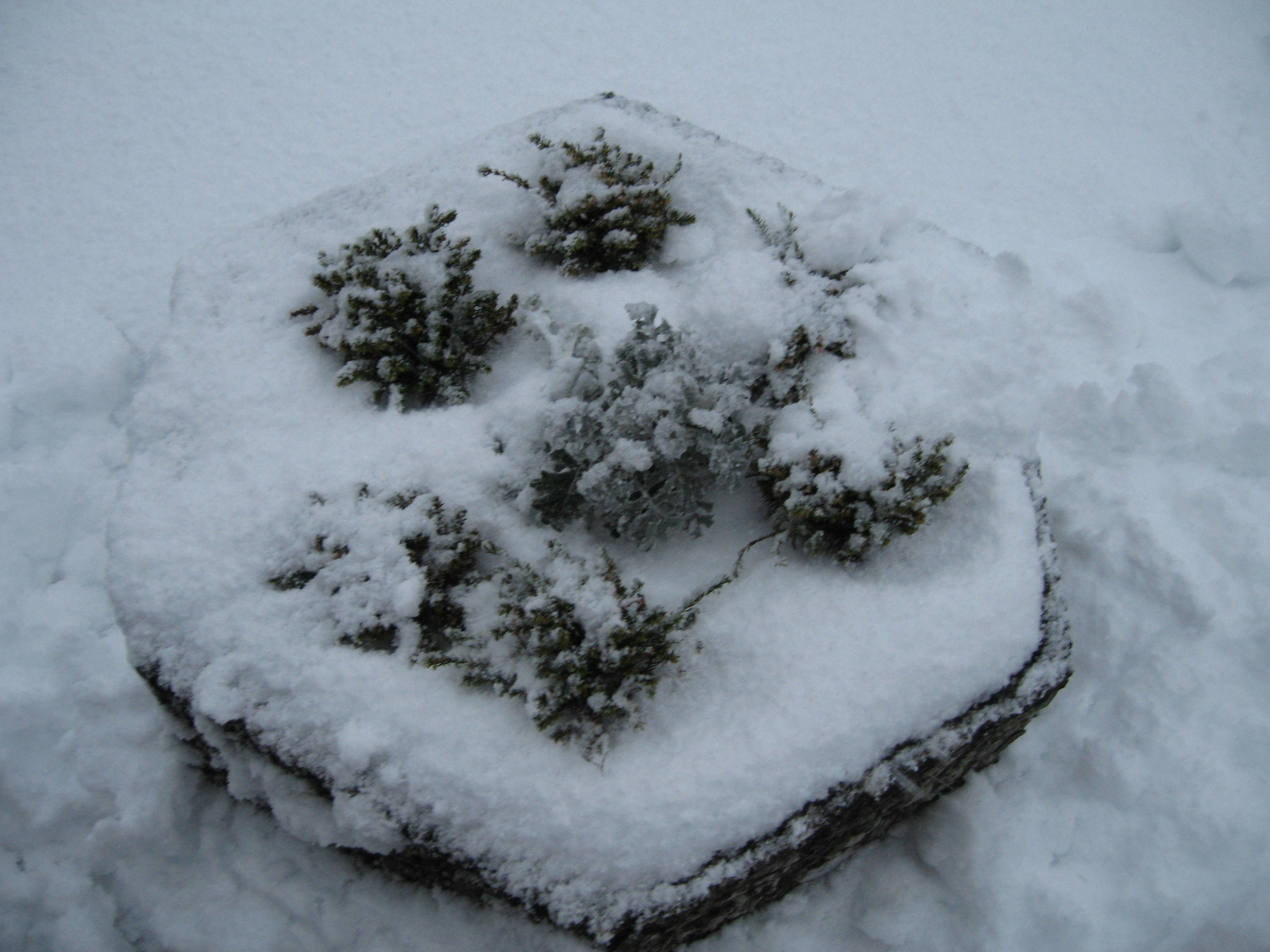 Snow smothered planter