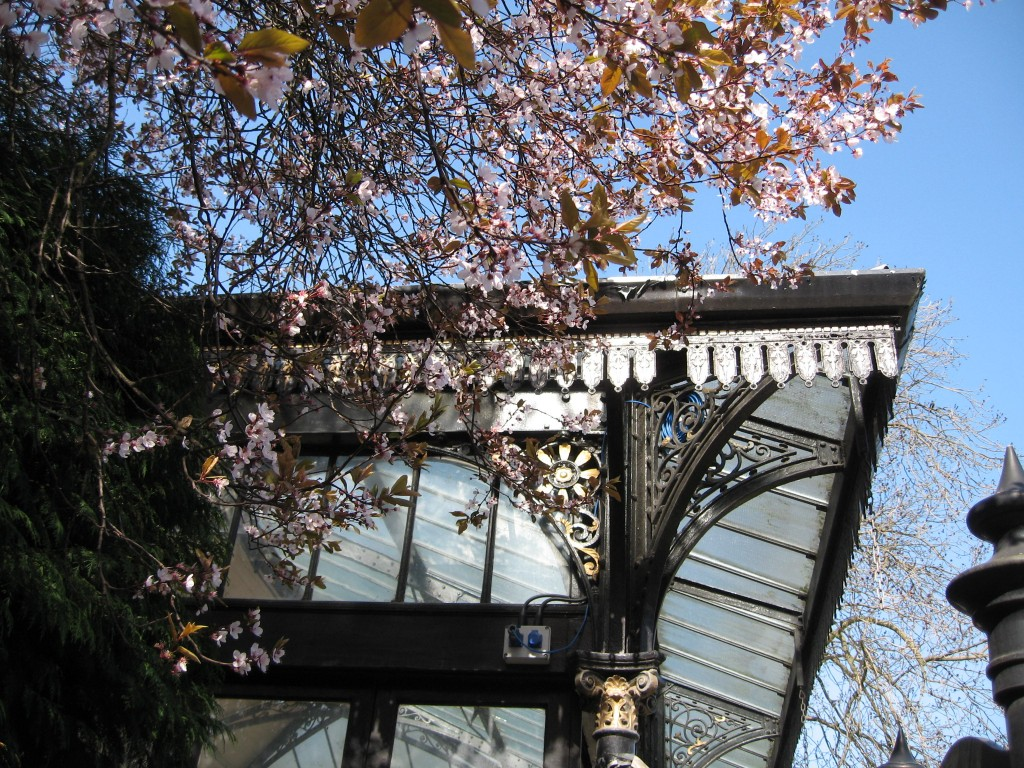 Bandstand and cherry blossoms