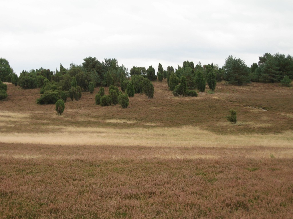Heath scenery