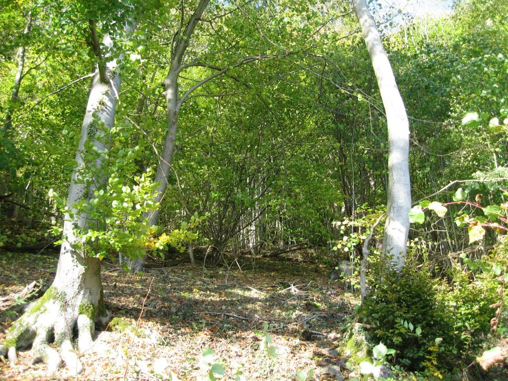 Weserbergland - woods