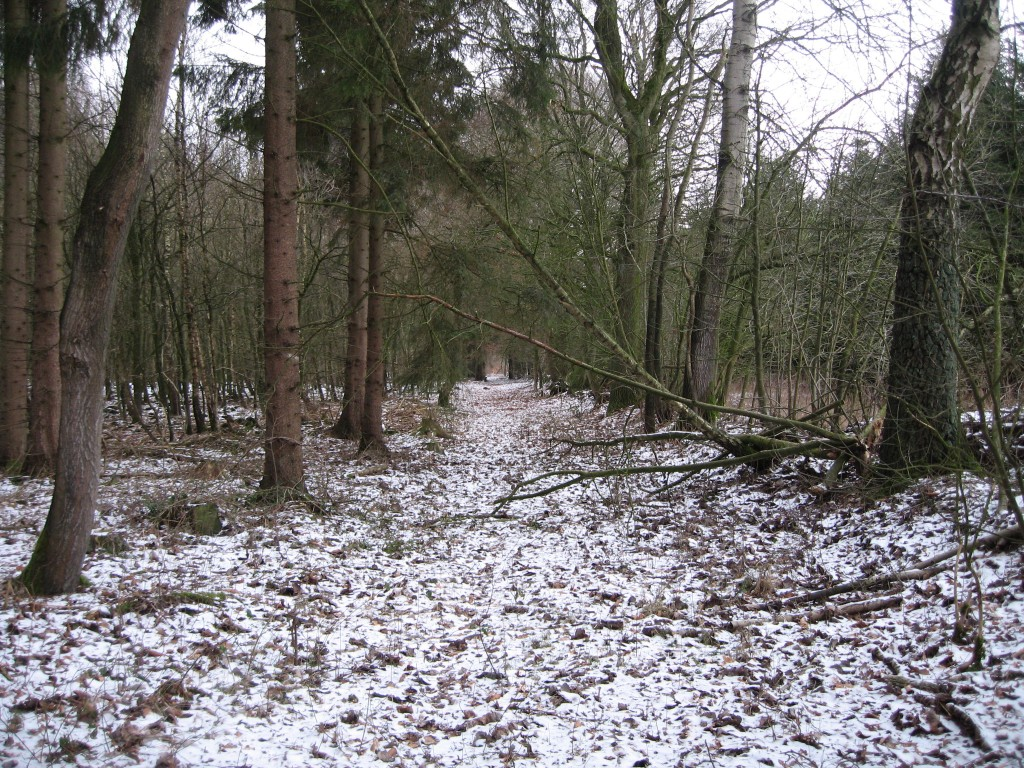 Snowy woodpath
