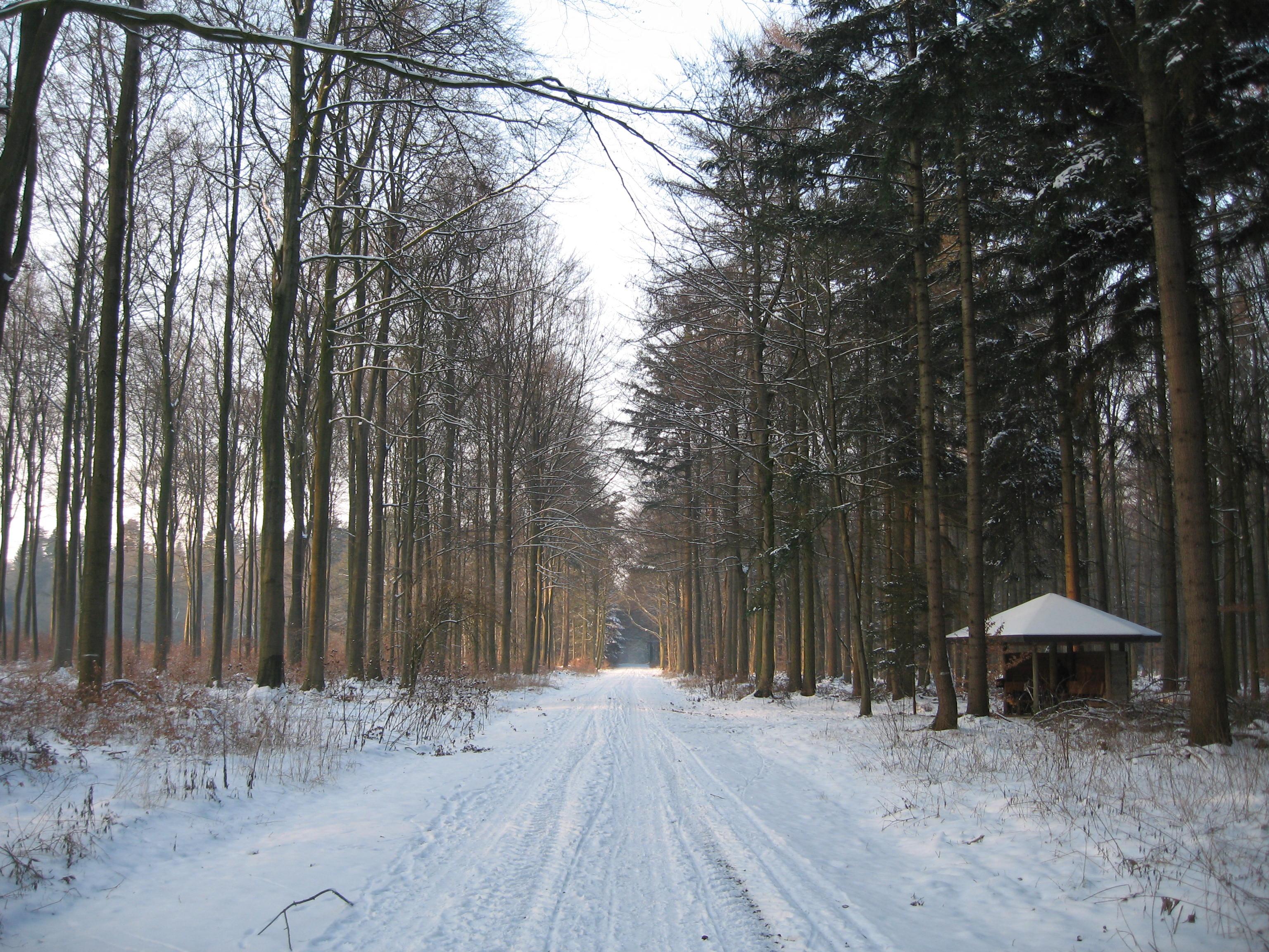 Snowy Woods Path Snowy Path