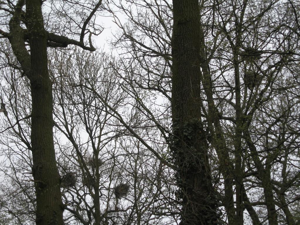 Crane nests, Wolfskuhle park
