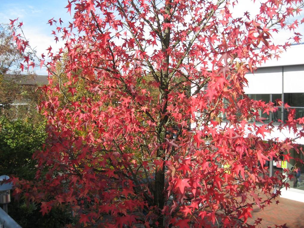 Vechta foliage