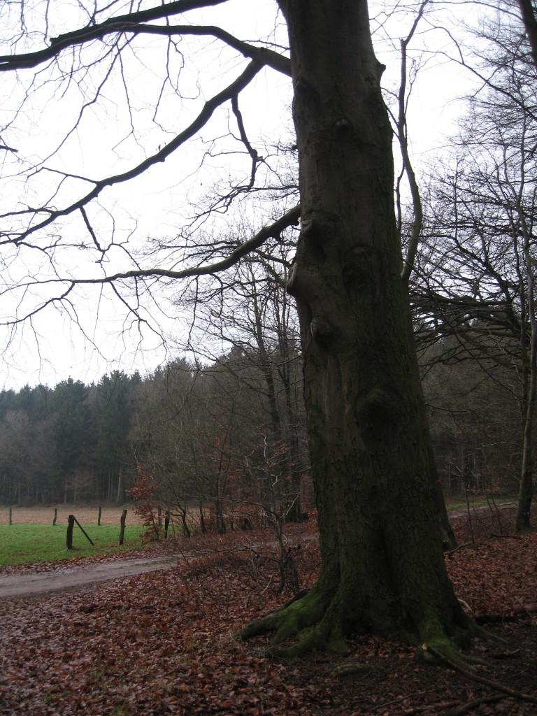 Westermark woods Syke