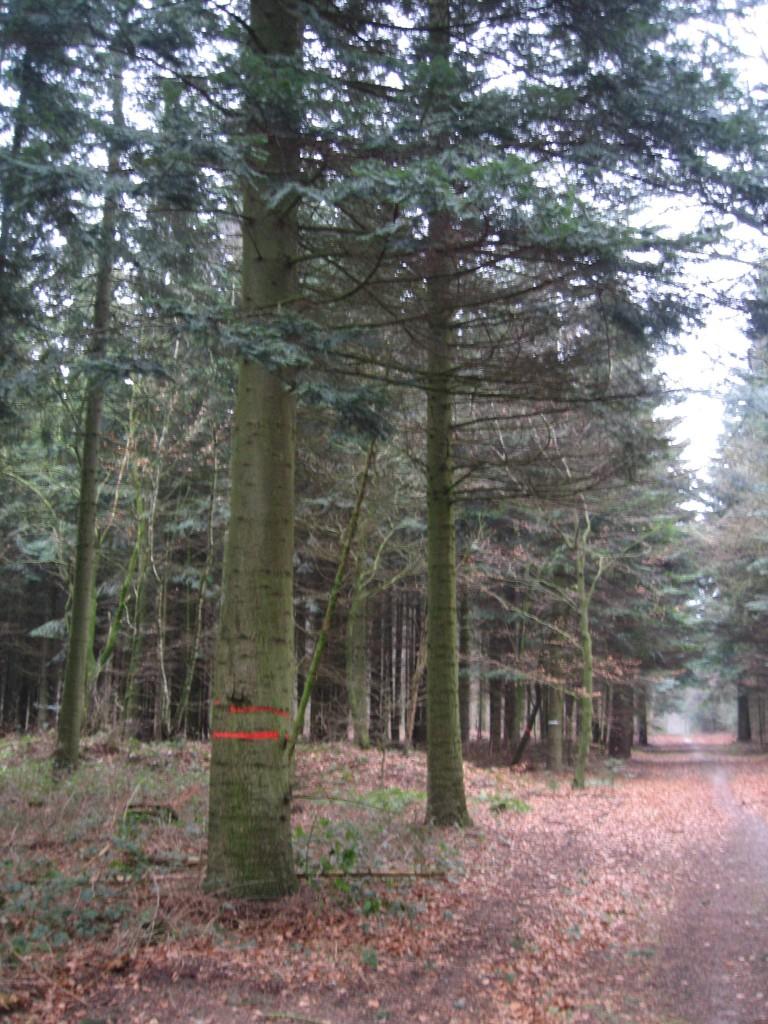 Westermark woodpath