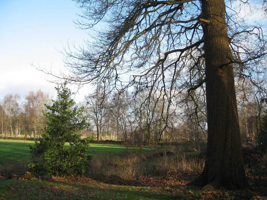 Teufelsmoor trees