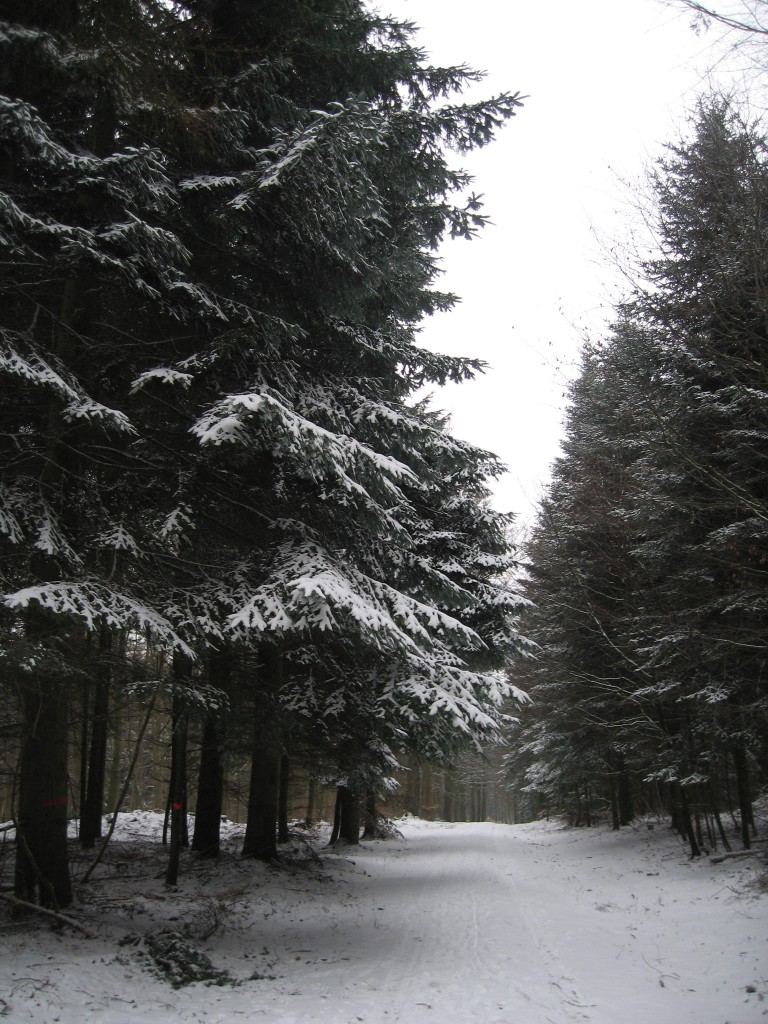 Snowy wood path
