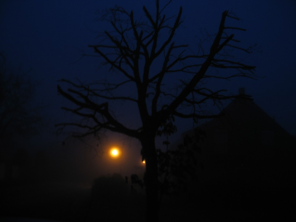 Spooky foggy view