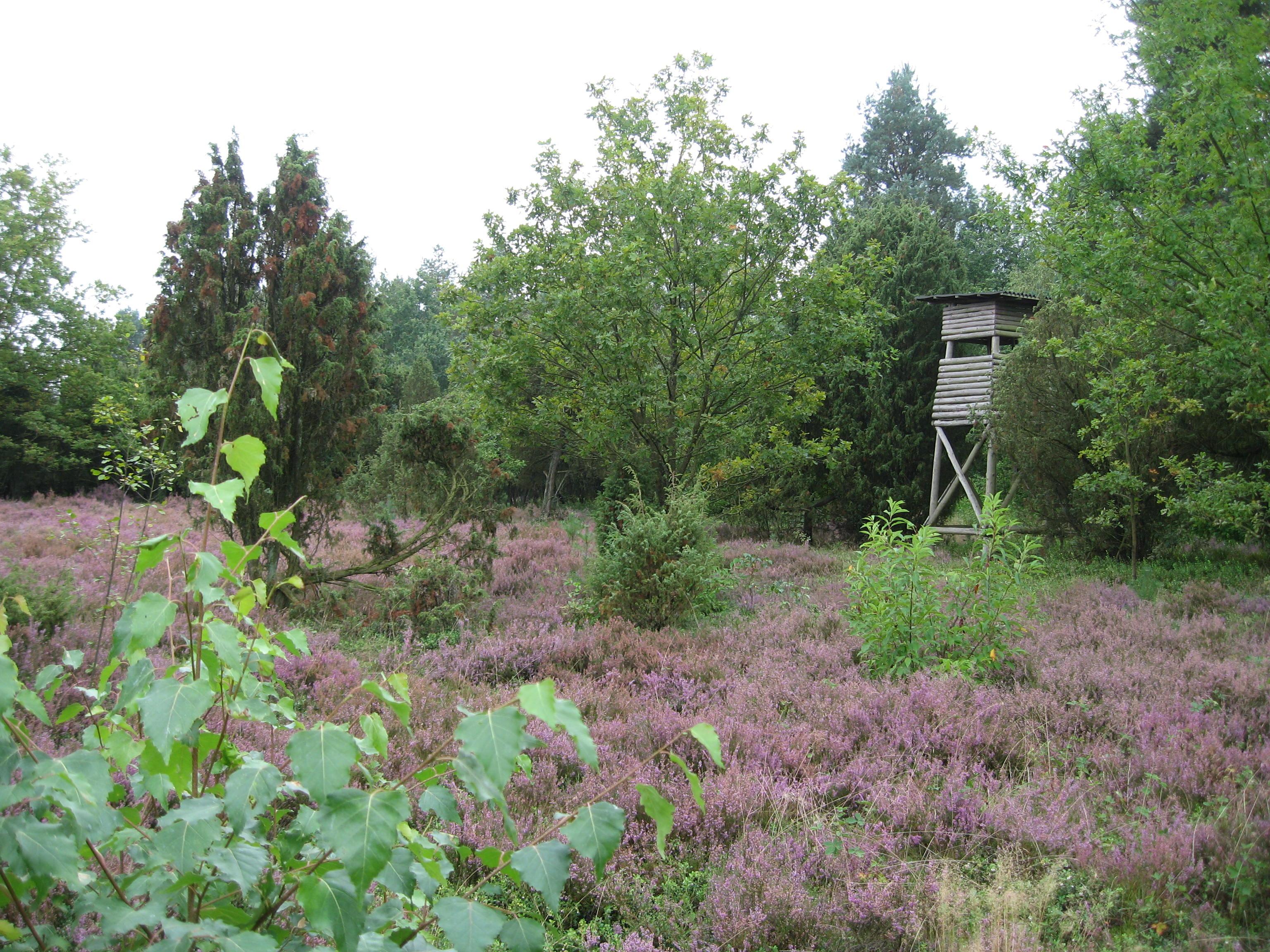 Photos: Lüneburger Heide 2014 (with bonus crazy house)   Cora Buhlert