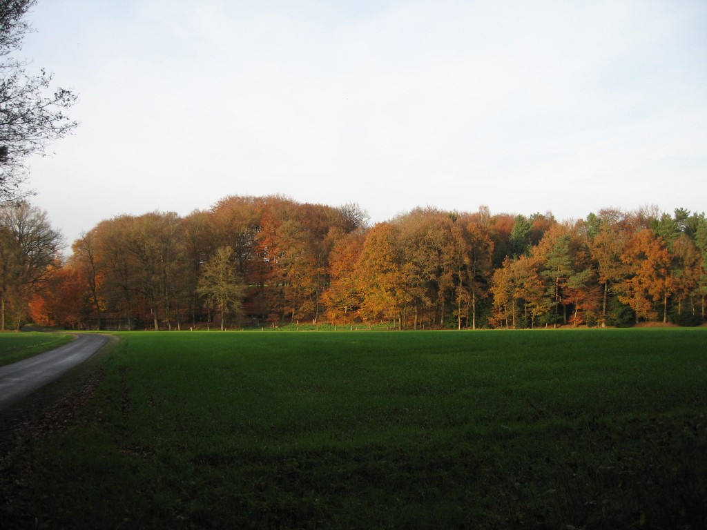 Fall colours near Steinforth
