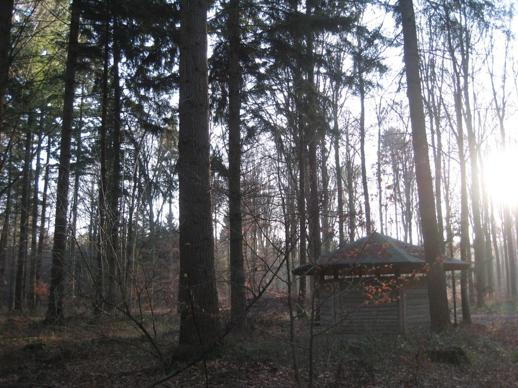 Woodlands hut