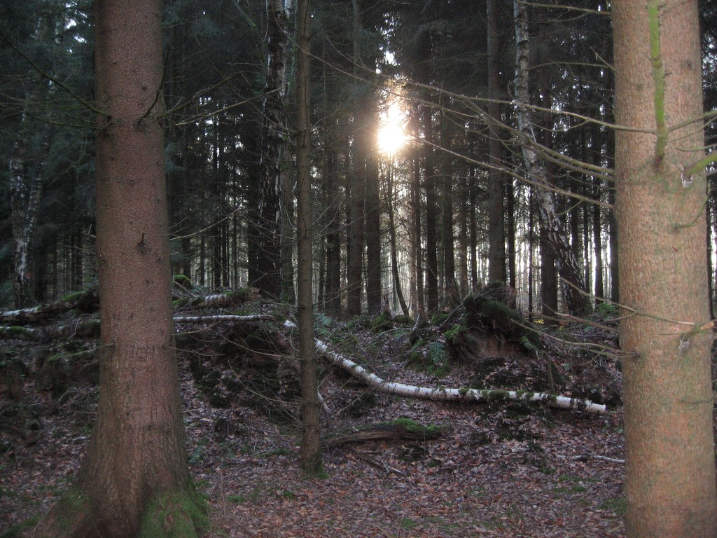 Sun in the woods.