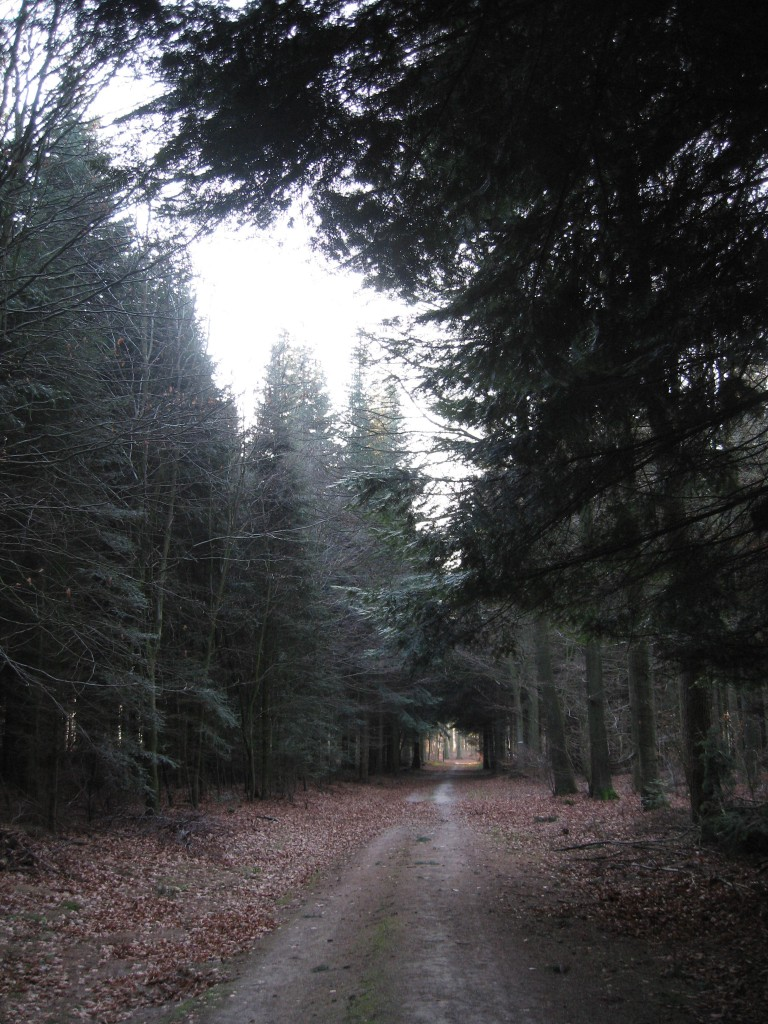 Dark woodland path