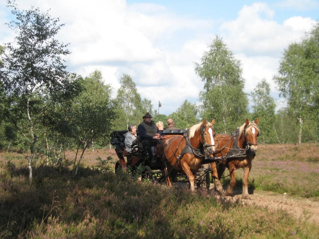 Horse carriage Lüneburger Heide