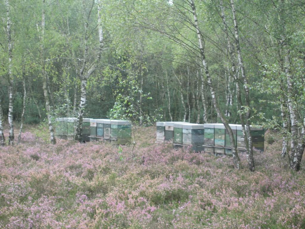 Heide beehives