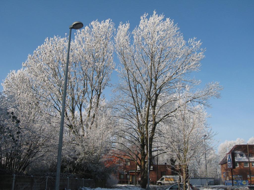 Hoarfrost trees