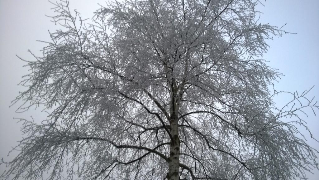 Hoarfrost branches